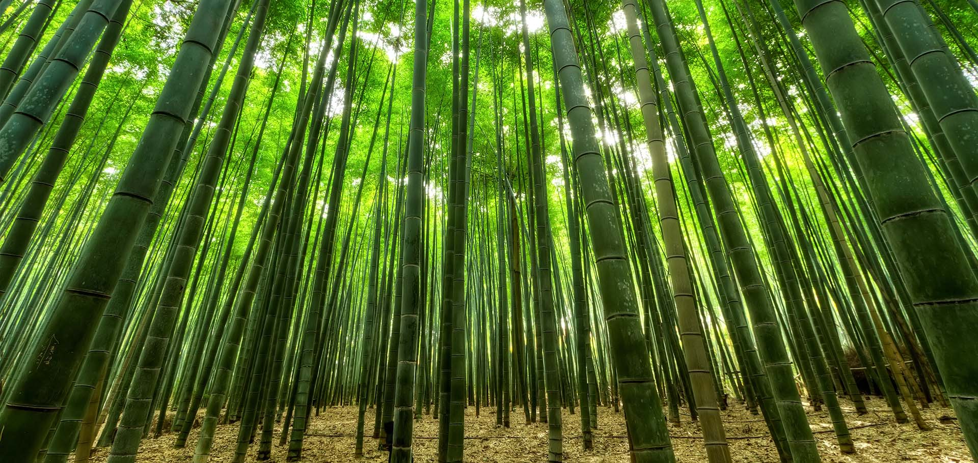 Resources for bamboo plants & products