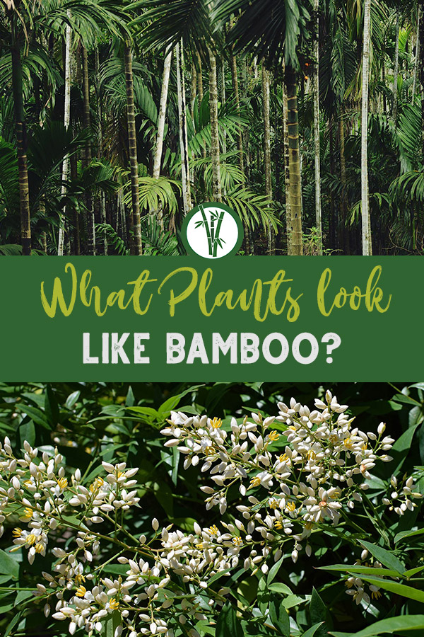 Bamboo palm and Heavenly Bamboo with the text: What Plants look like bamboo?