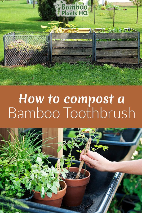 So many people switch to bamboo toothbrushes nowadays. But what do you do with them later? You can compost them, of course! We show you what you have to do to compost your bamboo toothbrush and how you can reuse it before composting it as well. #bambootoothbrush #composting #compost #greenlife #toothbrush #howto #bamboo
