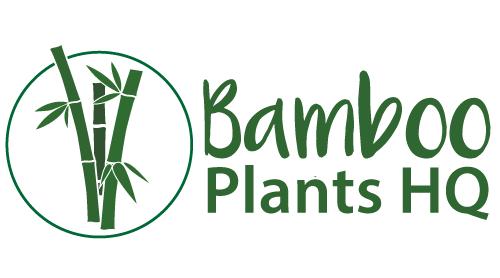 Bamboo Plants HQ