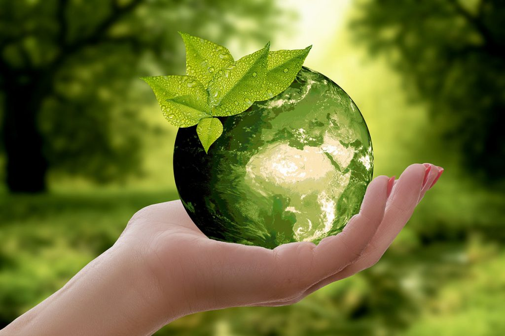 Hand holding a glass ball with forest background - Is bamboo really a sustainable and eco-friendly resource?