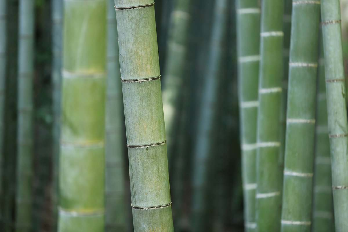 Green bamboo canes closely side-by-side