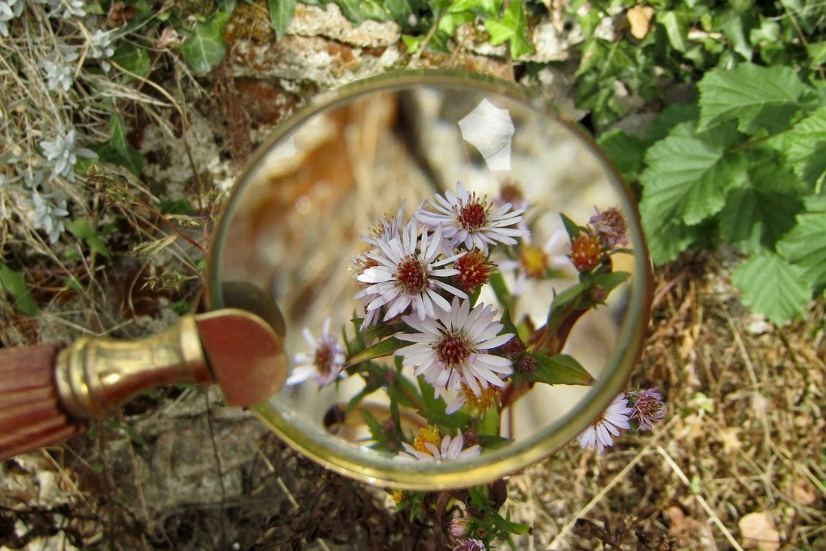 Classic magnifying glass over a flower