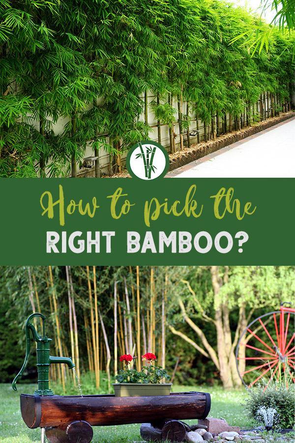 Gardens with bamboo and the text: How to pick the right bamboo?