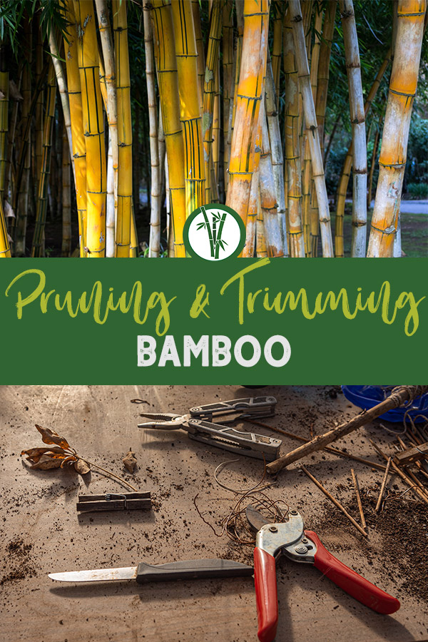 Bleached bamboo stems and pruning tools with the text: Pruning & Trimming Bamboo