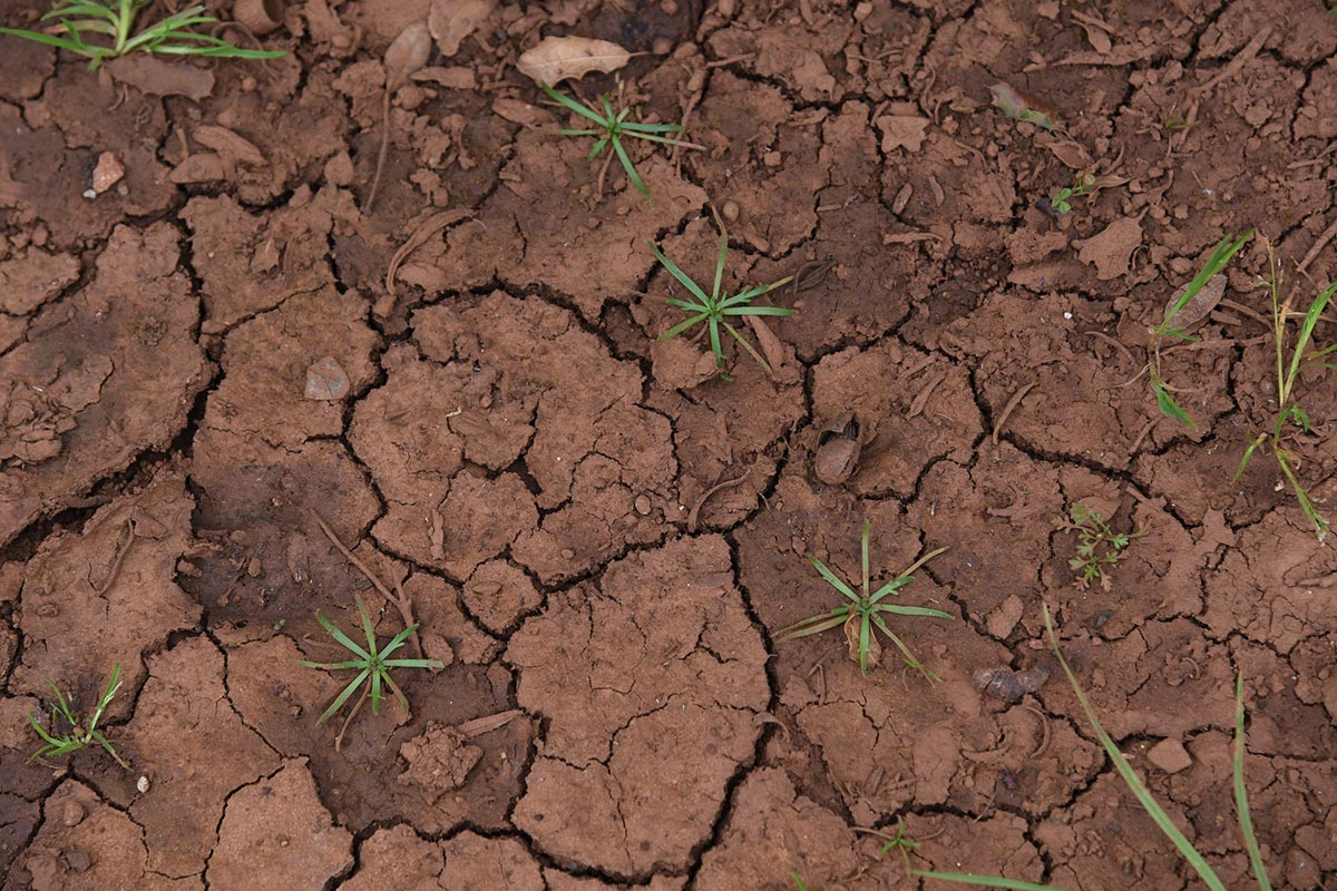 Dry dark brown clay soil with plants slowly growing from it