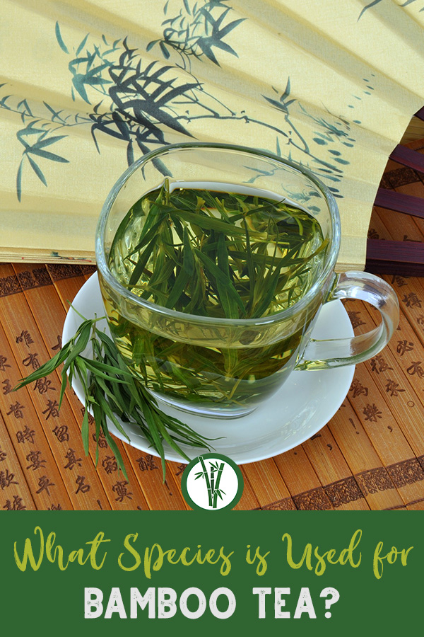 Cup of bamboo tea and a fan with the text: What species is used for bamboo tea?