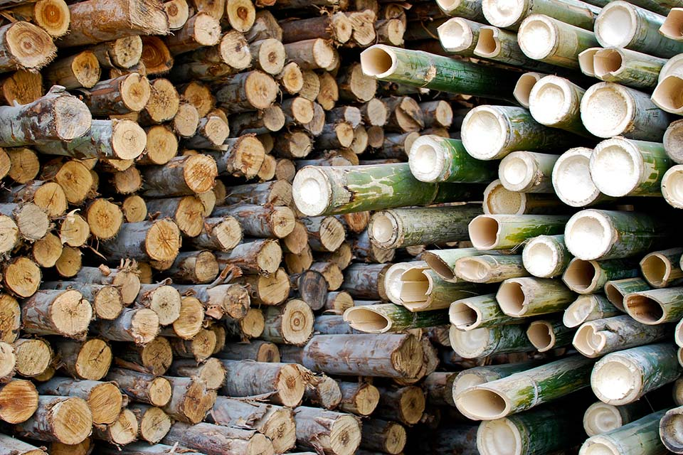 Green bamboo and hardwood piled up side by side to use as firewood