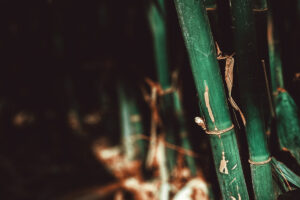 Green bamboo with dark shadows in the background
