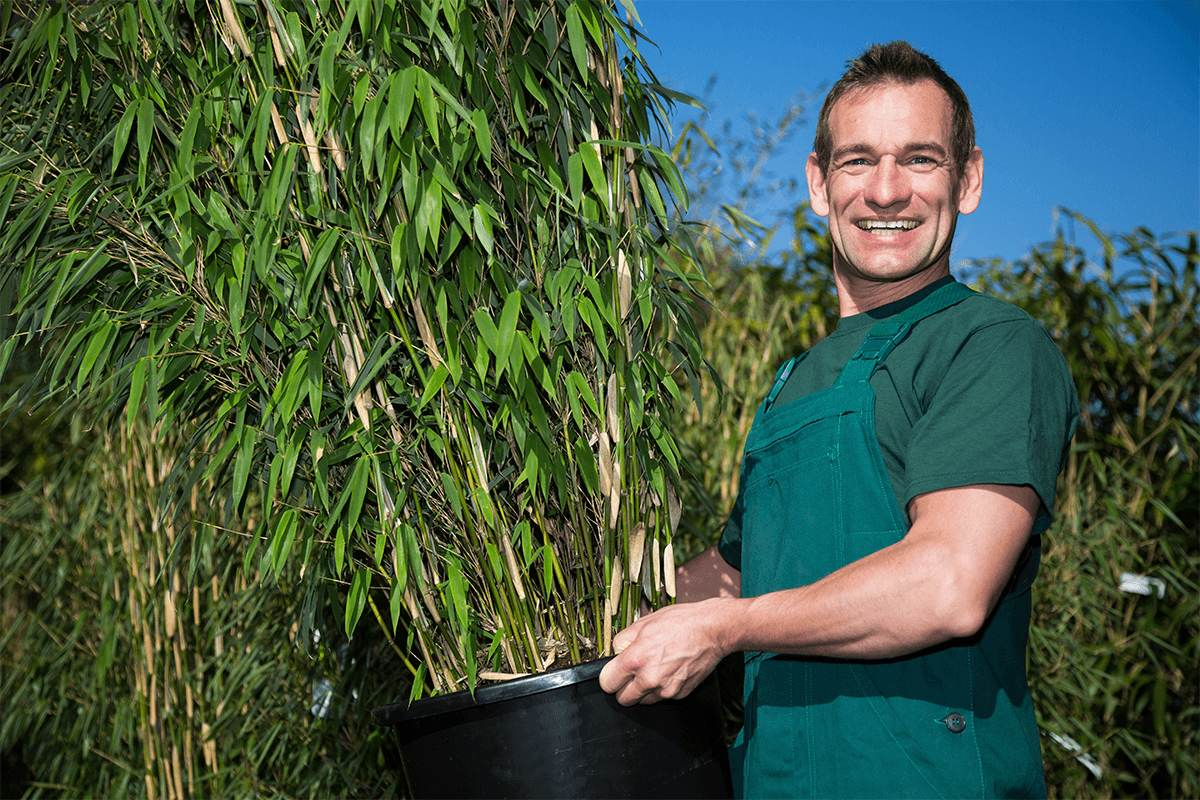 Gardener posing with potted bamboo plant in nursery
