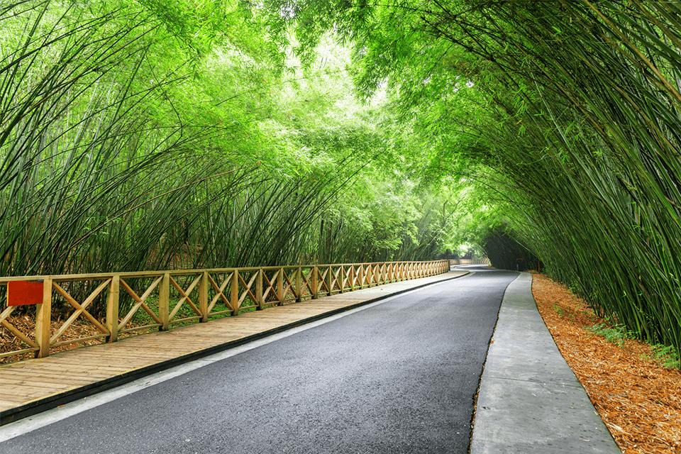 Amazing winding road among green bamboo woods